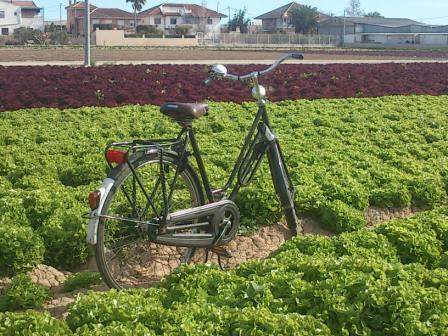 bici huerta murcia